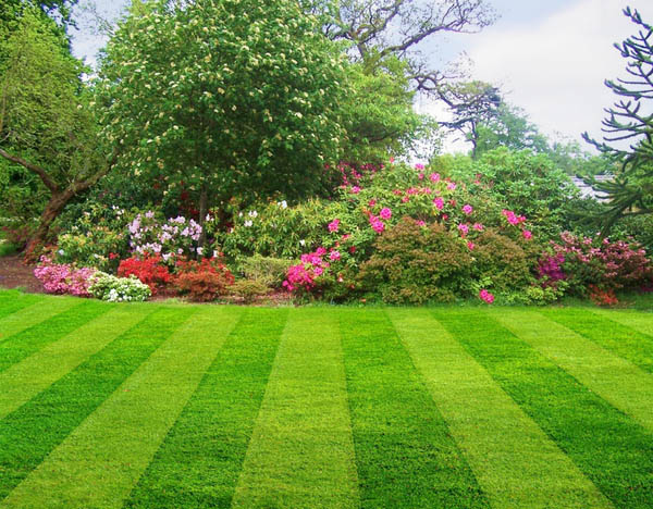 St augustine lawn care having your lawn professionally mowed can help your grass maintain its beauty workwithnaturefo